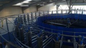 agricultural-milking-parlour-castledermot-3